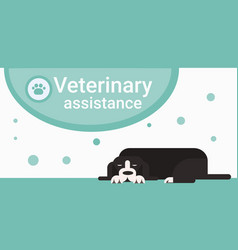 Veterinary assistance clinic for animals pets vet vector
