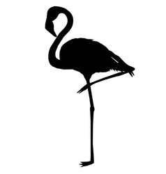 pink african beak beauty leg wildlife beach vector image