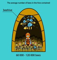 Bee infographics vector