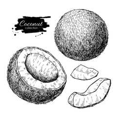 hand drawn coconut set Tropical summer vector image