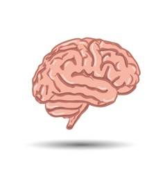 human brain on white background vector image