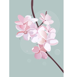 blossom poster vector image vector image