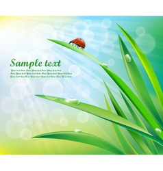 Sunny background with grass vector image