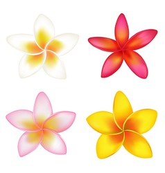 4 fragipani vector