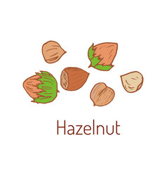 hazelnuts hand drawn vector image