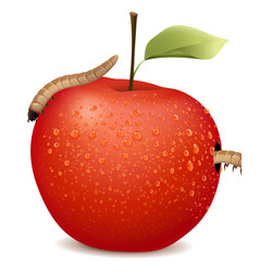 Red apple with two worms vector