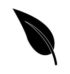 Organic leave natural plant botanical vector