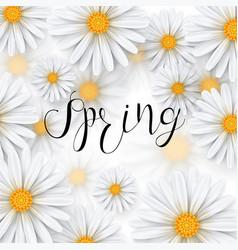 Chamomile flower spring background vector