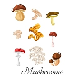 Forest mushrooms set in cartoon style vector