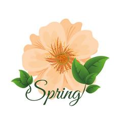 spring cute flowe vector image