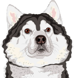 Dog alaskan malamute breed vector