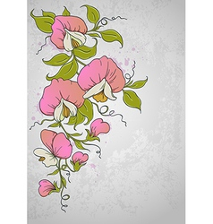 flowers sweet pea vector image