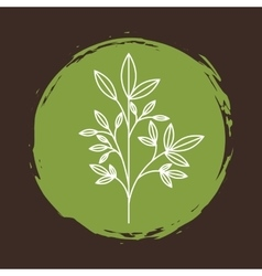 Plant with leaves icon vector