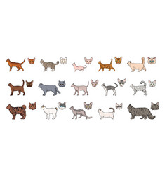 Cats breeds side view and muzzle set collection vector