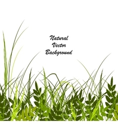 with a beautiful green grass vector image