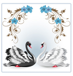 Elegant white and black swan vector