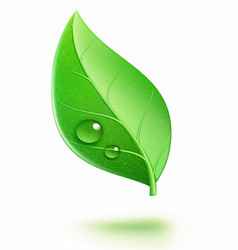 glossy green leaf vector image