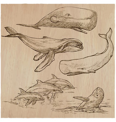 Cetaceans cetace - an hand drawn pack sketching vector