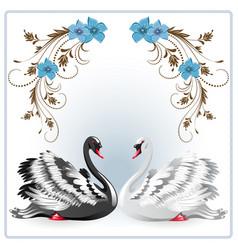 Elegant white and black swan vector