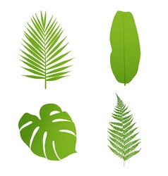 Set of tropical leaves palmbananafernmonstera vector