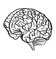 human brain outline sketched up vector image vector image