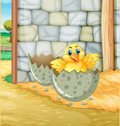 Little chick hatching egg in barn vector