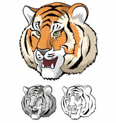 tiger head close up vector image
