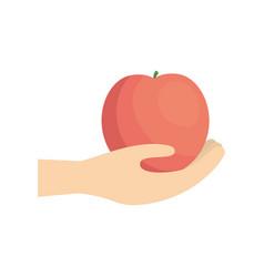 hand holding pomegranate fruit vector image