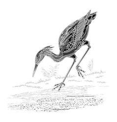 Heron water bird vintage engraving vector