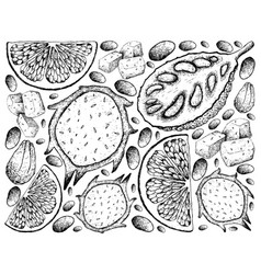 Hand drawn of jackfruit dragon fruit and grapefru vector