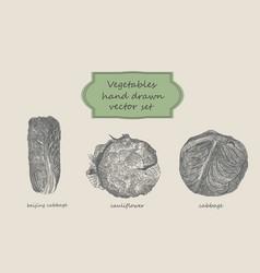 vegetables hand drawn set beijing cabbage vector image