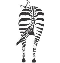 zebra ass vector image vector image