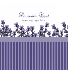 Lavender Card with Vintage border vector image