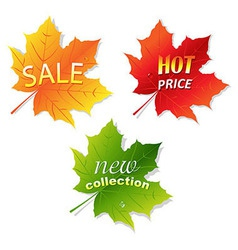 Collection Sale Leaves vector image