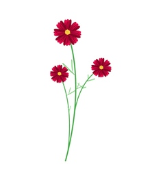Three Red Cosmos Flowers on White Background vector image