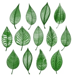 Set of green leaves isolated vector
