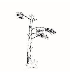 Ink sketch scotch fir vector