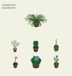 isometric flower set of fern flowerpot blossom vector image vector image