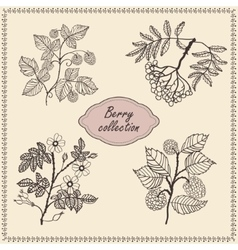 Collection of hand drawn berries vector