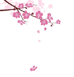 Cherry branch with flowers isolated on white vector image