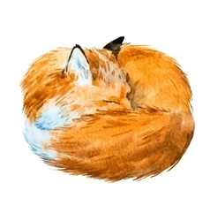 Watercolor sleeping fox vector