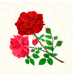 Bouquet of red and pink roses and rosebuds vector