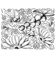 Hand drawn of fresh fruits on white background vector