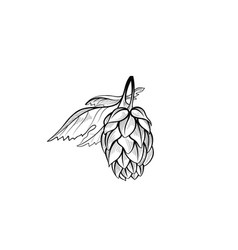 hops bush floral beer icon engraving hand drawn vector image vector image