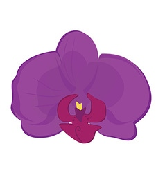Purple orchid flower vector image