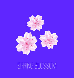 spring time card with sakura flowers vector image vector image