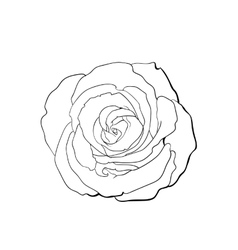 Deep contour rose top view isolated sketch vector