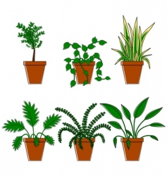 six plants in pots vector image