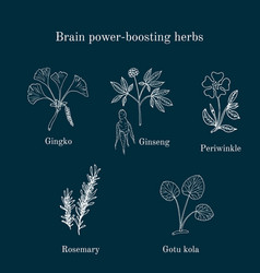 brain power-boosting herbs set vector image