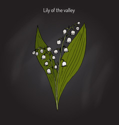 lily of the valley convallaria majalis vector image